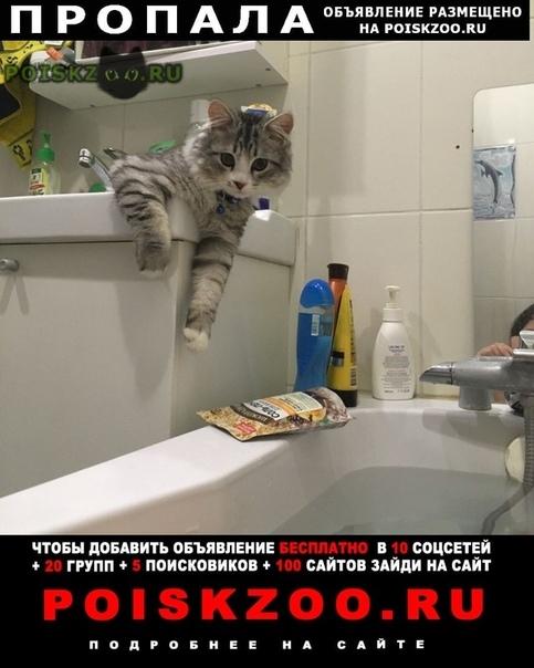 Пропал кот китя г.Березовский (Свердловская обл.)