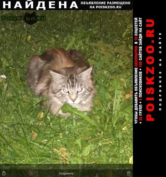 Найдена кошка козлово г.Конаково