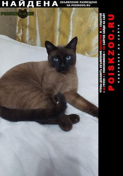 Найден кот похож на симского коричневый г.Санкт-Петербург