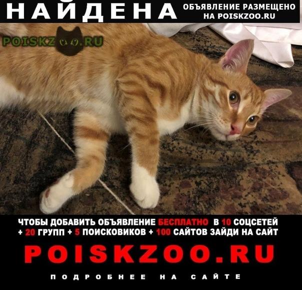 Найден кот проспект славы г.Санкт-Петербург