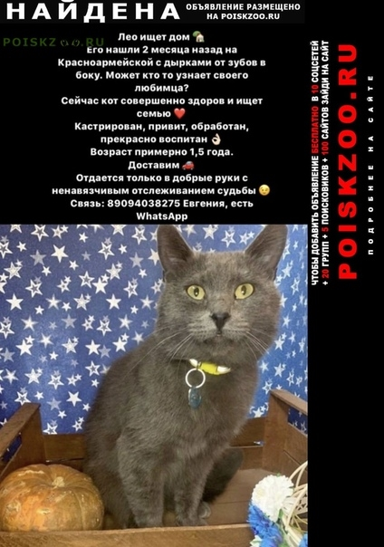 Найден кот г.Ростов-на-Дону