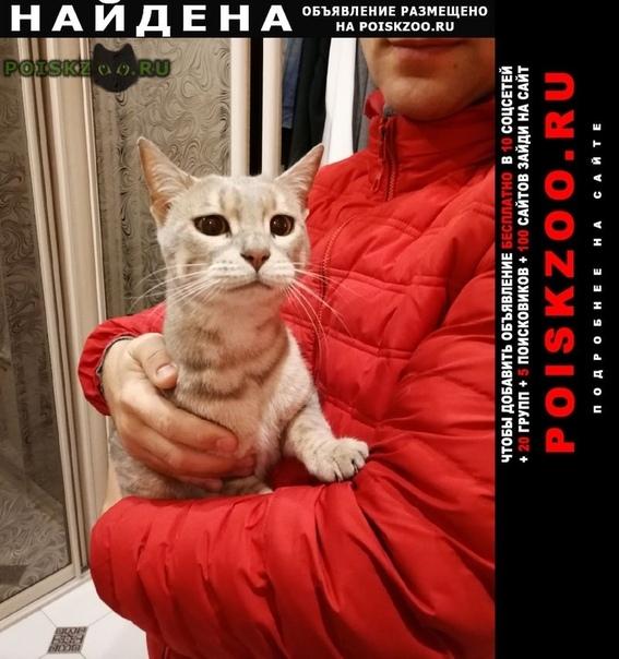 Найдена кошка 25.10. в немчиновке село ромашково г.Москва