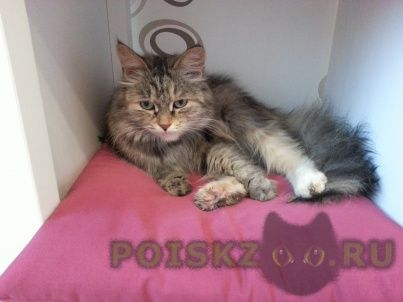 Найдена кошка кошечка на юго-западе г.Екатеринбург