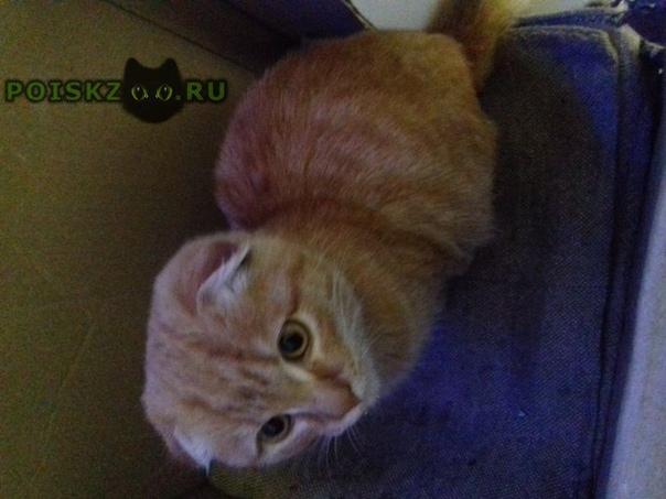 Найден котёнок г.Новоалтайск