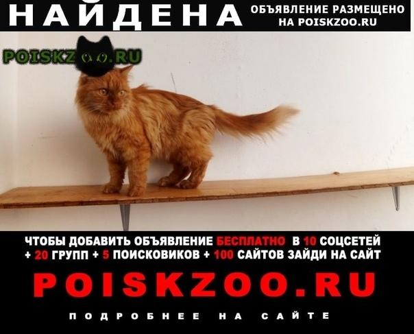 Найдена кошка кошечка г.Москва