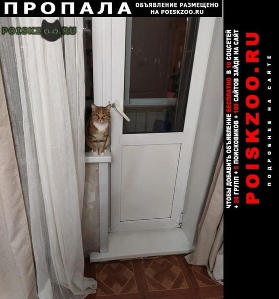 Пропала кошка Усолье-Сибирское (Иркутская обл.)