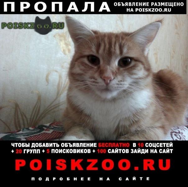 Пропала кошка в районе деревни кукарино Можайск