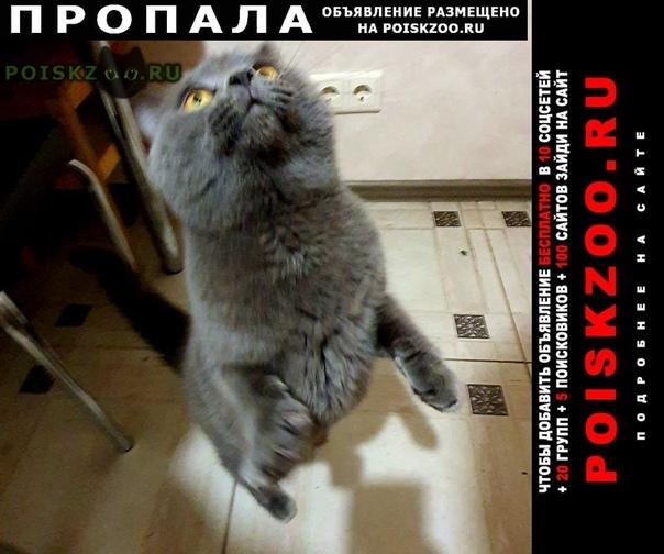 Пропал кот, по кличке бэнкси г.Москва