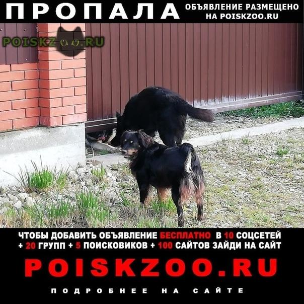 Пропала собака г.Протвино (Московская обл.)