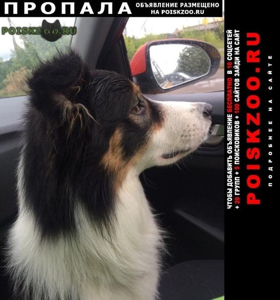 Пропала собака г.Ногинск