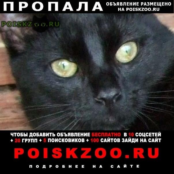 Пропал кот черный гладкошерстный г.Санкт-Петербург