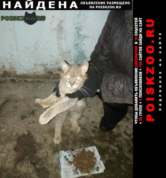 Найдена кошка г.Ярославль