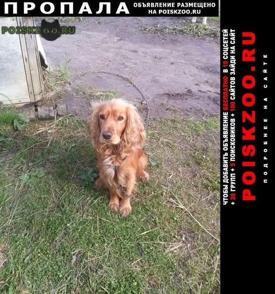Пропала собака кобель по кличке ким  г.Сыктывкар