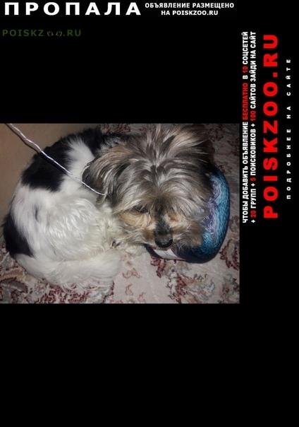 Пропала собака кобель г.Москва
