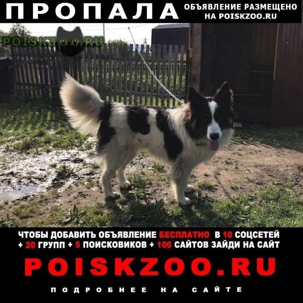 Пропала собака может находиться в любой области россии г.Вельск