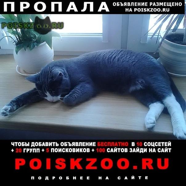 Пропал кот г.Михнево