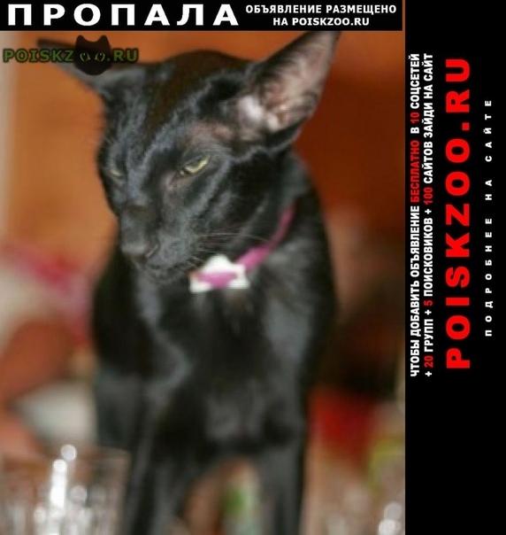 Пропал кот любимый . кратово г.Раменское