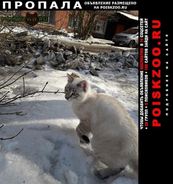 Пропал кот г.Иркутск