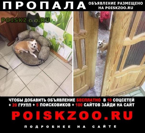 Пропала собака г.Казань