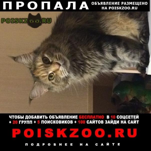 Пропала кошка помогите  г.Иркутск