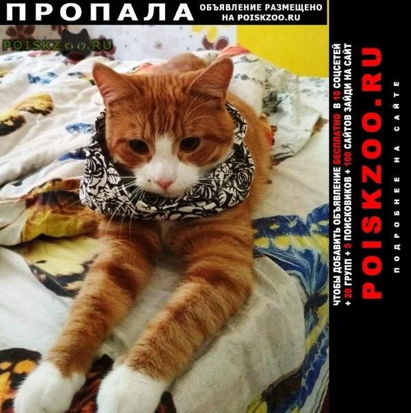 Пропал кот бело-рыжий г.Вологда