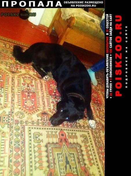 Пропала собака кобель помогите  г.Раменское