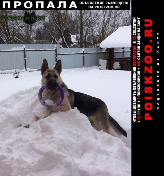 Пропала собака кобель г.Клин