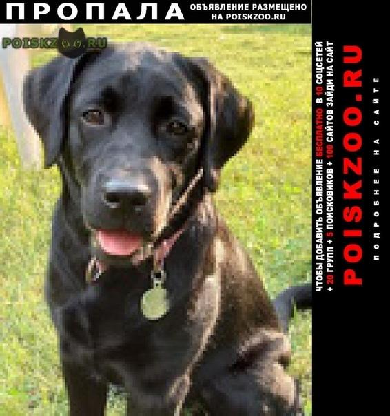 Пропала собака лабрадор черный, девочка, 10 месяцев г.Москва