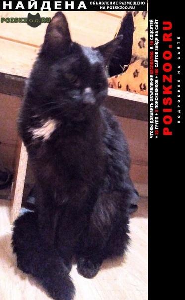 Найден котик ищет хозяина г.Вырица