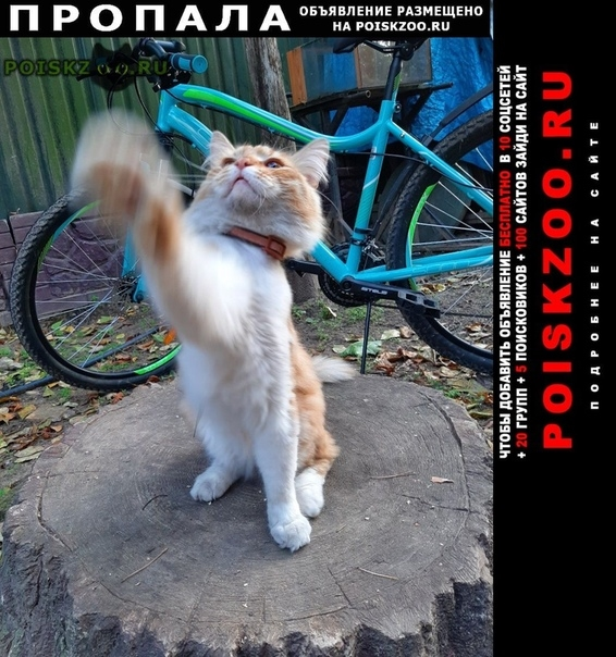 Пропал кот г.Раменское