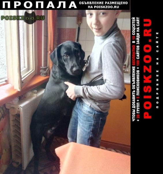 Пропала собака г.Витебск