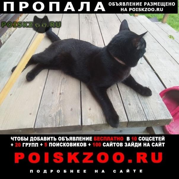 Пропал кот помогите найти г.Гатчина