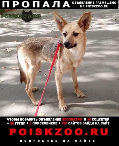 Пропала собака в районе рязанского проспекта г.Москва