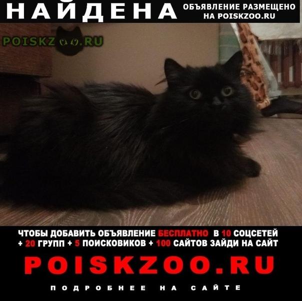 Найден кот чёрный кастрированный молодой г.Ломоносов