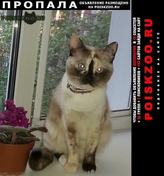 Пропала кошка мася-масяня в е г.Александров