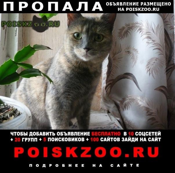 Пропала кошка г.Симферополь