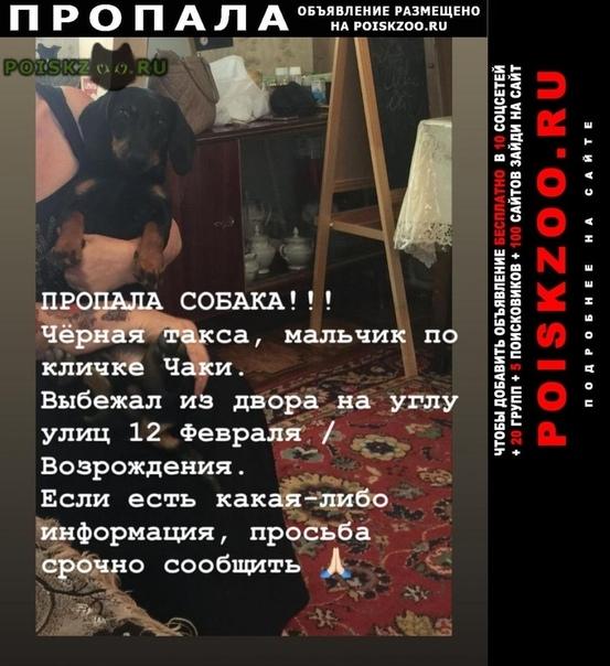 Пропала собака кобель г.Ростов-на-Дону