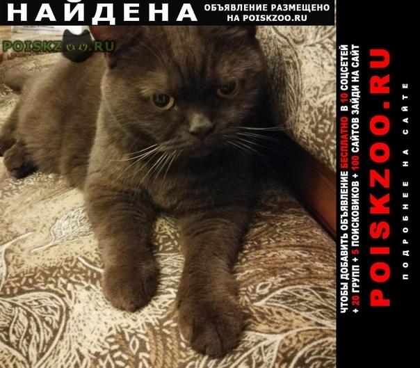 Найдена кошка измайлово г.Москва