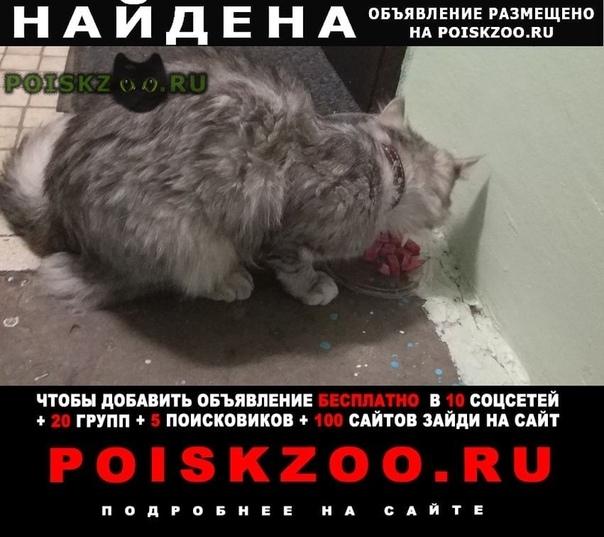 Найдена кошка прибилась в подъезде, с ошейником г.Реутов