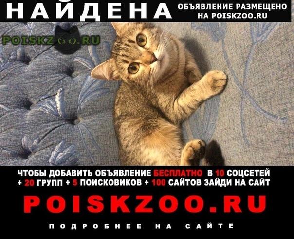 Найдена кошка м. домодедовская г.Москва
