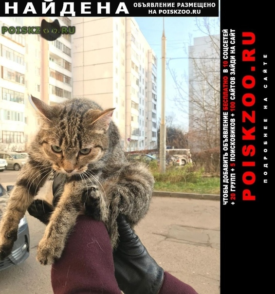 Найдена кошка в р- не корпусов 602-604. г.Зеленоград