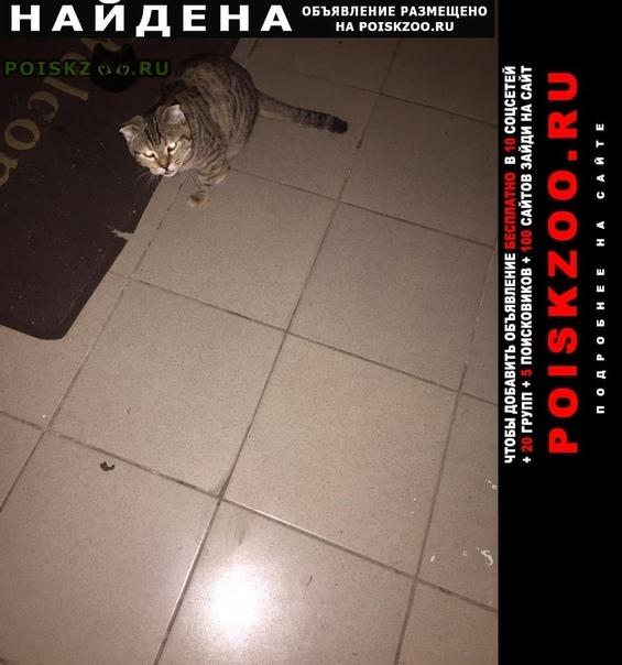 Найдена кошка вислоухая г.Ставрополь