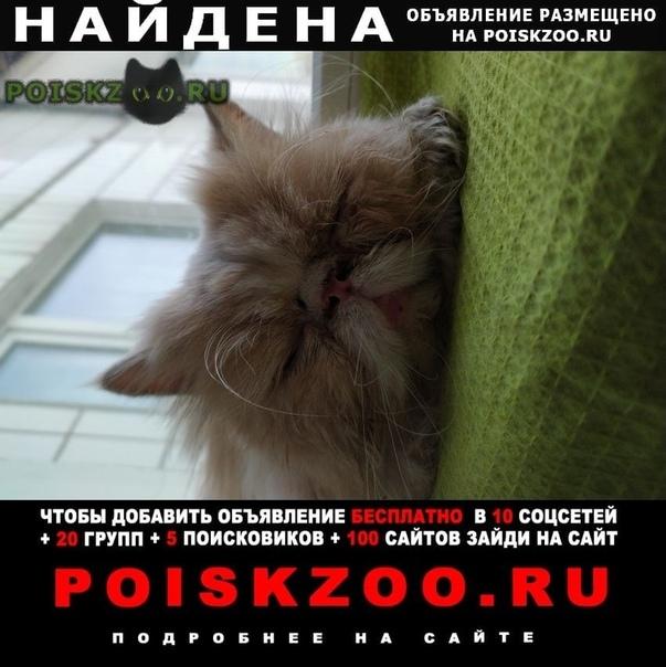 Найдена кошка персидская г.Москва