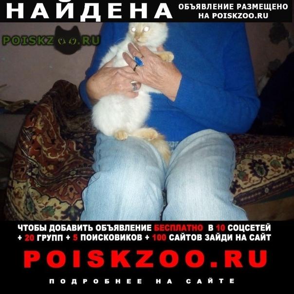 Найден кот енок-подросток, мальчик, бело-рыжий г.Пятигорск