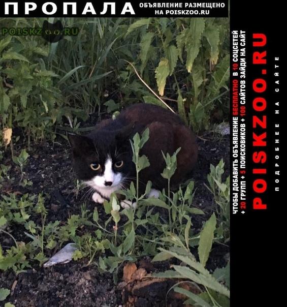 Пропала кошка Бийск