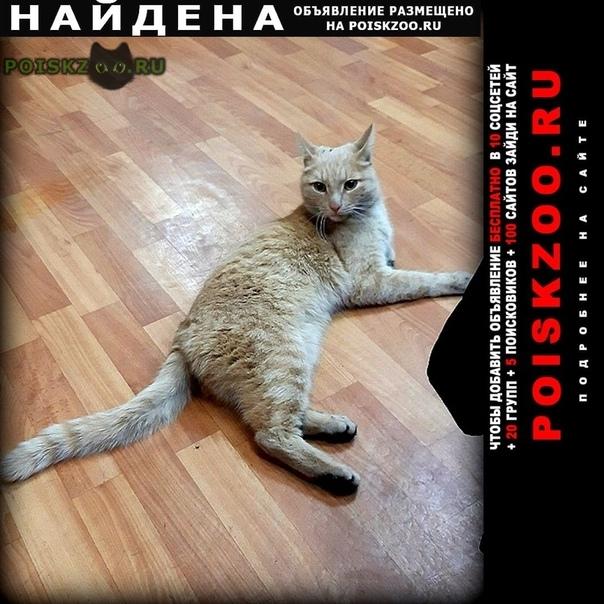 Найден кот г.Самара