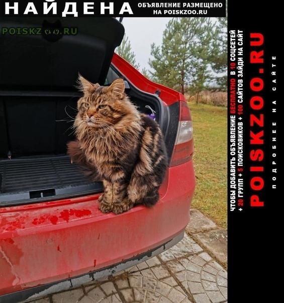 Найден кот г.Волоколамск