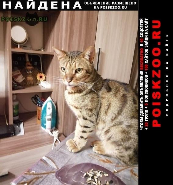 Найден кот бенгал г.Медынь