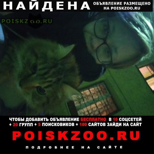 Найдена кошка на улице некрасова г.Санкт-Петербург