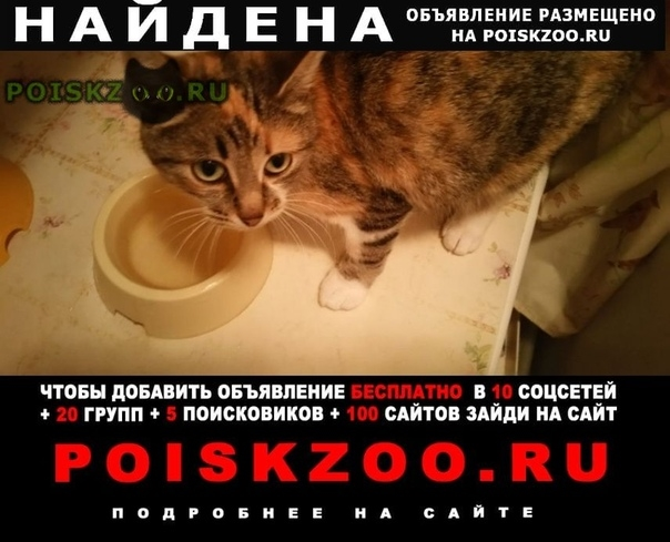 Найдена кошка трехцветная г.Обнинск